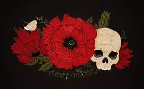 Картинка череп, маки, символы, красные, черный фон, мотылёк, Memento mori