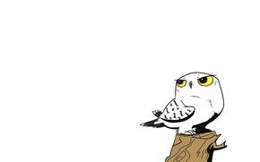 Картинка дерево, сова, птица, минимализм, пенек, белый фон, owl