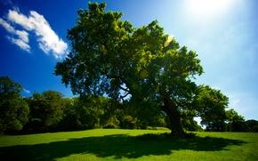 Обои лето, солнце, трава, дерево