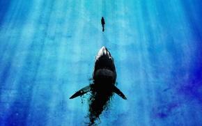 Обои лучи света, девушка, мега-акула