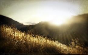 Картинка трава, свет, природа, стиль