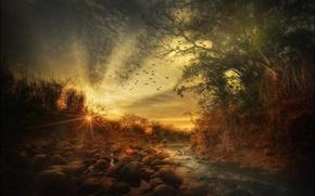 Картинка птицы, ручей, камни, обработка