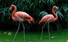 Картинка вода, деревья, фламинго