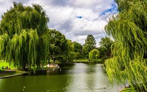 Обои парк, зелень, деревья, Boston, Massachusetts, пруд, США