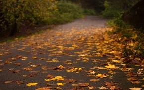 Картинка дорога, осень, асфальт, листья, деревья, природа, желтые