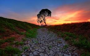 Картинка небо, трава, закат, трещины, дерево, грунт