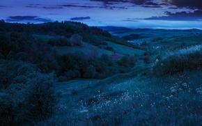 Картинка деревья, ночь, природа, холмы, луна, trees, nature, night, hills, the moon