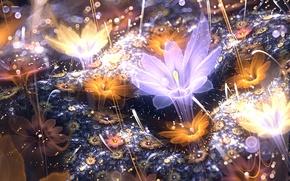 Картинка цветок, свет, лепестки