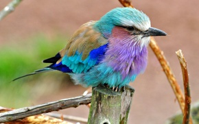 Картинка цвет, перья, клюв, птица