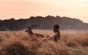 Картинка girl, twilight, field, sunset, dusk, countryside, deer, wildlife