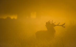 Картинка природа, туман, олень