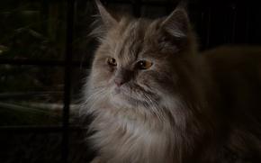 Картинка кот, пушистый, рыжий, лежит