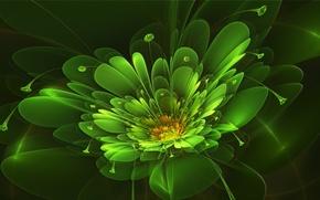 Картинка цветок, лучи, абстракция