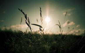 Картинка небо, трава, солнце, облака, макро, свет, природа, фокус, light, grass, sky, nature, 1920x1200, clouds, macro, …