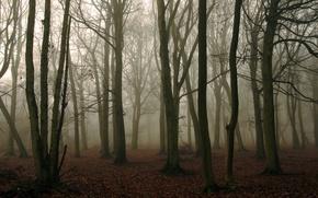 Обои лес, туман, природа