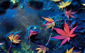 Картинка листья, вода, макро, камни, фон, widescreen, обои, листик, wallpaper, листочек, широкоформатные, background, полноэкранные, HD wallpapers, ...