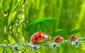 Обои вода, капельки, зонтики, божьи коровки, травинка, травинки