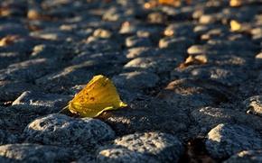 Картинка осень, Листок, мостовая, булыжник
