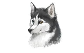 Картинка собака, минимализм, husky, хаски, dog, морда
