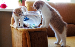 Обои котята, аквариум, рыбка