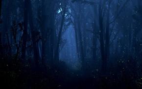 Обои лес, свет, деревья, ночь, светлячки, огоньки