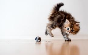 Картинка кошка, макро, котенок, испуг, игрушка, шарик, Daisy, Ben Torode