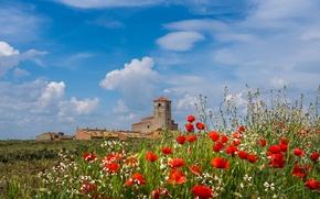 Картинка цветы, Паленсия, Кампос-де-Кастилья, Ревилья-де-Кампос, башня, Испания, маки