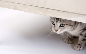 Картинка кошка, глаза, кот, взгляд, смотрит