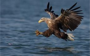 Обои полёт, вода, крылья, птица, взмах