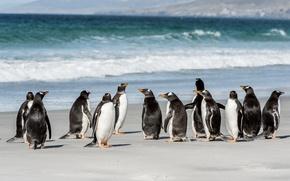 Обои море, стая, побережье, пингвины