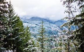 Картинка холод, зима, лес, снег, деревья, горы, туман