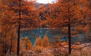 Картинка осень, лес, деревья, горы, природа, озеро, forest, Nature, trees, landscape, autumn, lake, fall