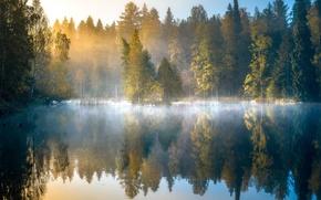 Обои лес, осень, рассвет, Финляндия, озеро, деревья, туман, отражение, утро