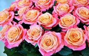 Картинка розы, букет, бутоны