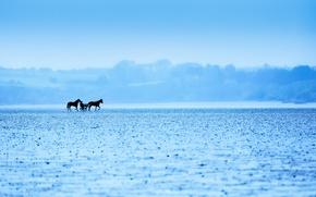 Картинка природа, туман, цвет, кони