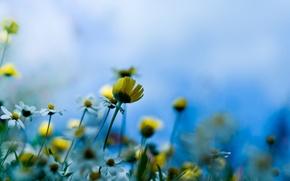 Обои макро, стебель, луговые цветы