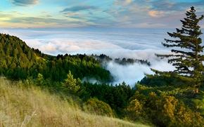 Картинка лес, небо, облака, горы, туман, склон