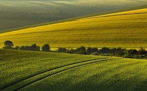 Обои утро, поле, лето, пейзаж