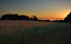 Обои трава, деревья, закат, Поляна