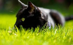 Картинка кошка, трава, зеленые глаза