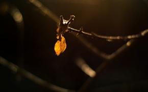 Картинка листья, макро, желтый, фон, дерево, widescreen, обои, темно, ветка, размытость, листик, wallpaper, листочек, широкоформатные, background, …