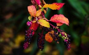 Картинка листья, ветка, плоды