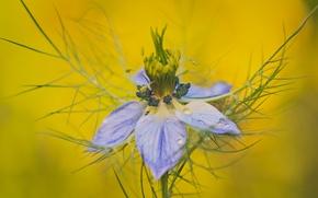 Обои фон, лепестки, цветок, капли