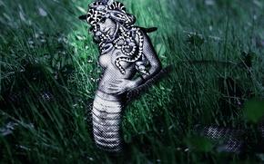 Картинка трава, девушка, змея, медуза горгона