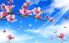 Картинка цветы, лучи, веточки, бабочки, природа, солнечные