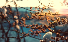 Картинка листья, солнце, макро, снег, ветки, фон, весна