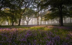 Картинка лес, цветы, природа, утро
