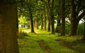 Картинка лес, деревья, природа, дорожка, ствол