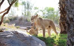 Картинка хищники, малыш, семья, пара, детёныш, дикие кошки, львы, львица, забота, львёнок, мать, материнство