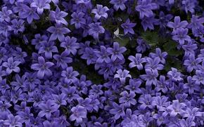 Картинка ковёр, фиолетовые, колокольчики